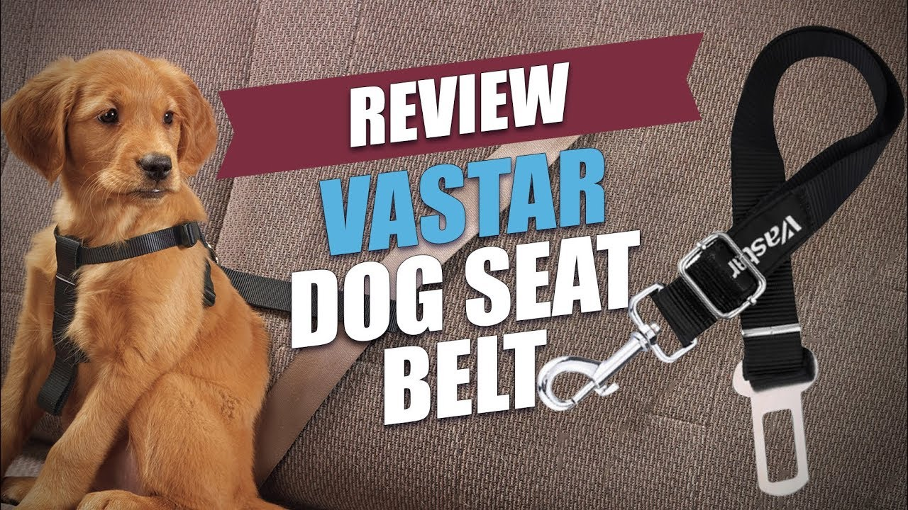 Vastar Dog Seat Belt Review 2018