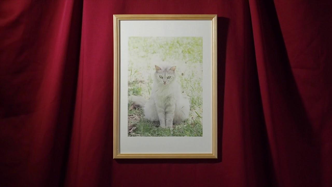 箱の中の猫写真展