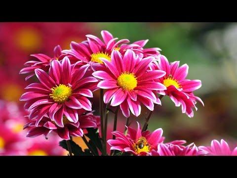 You Are Beautiful Beyond Description -by Infant Jesus Church Choir