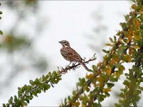 Aled Jones - Lark In The Clear Air