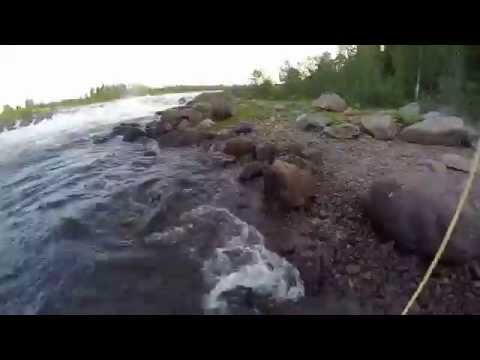 salmon fishing in torne river part 2