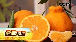 《农广天地》 20190719 倔强男人种下丑橘之后| CCTV农业