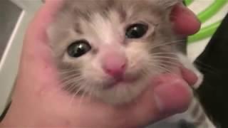 【子猫】捨て猫がいたので水責めしてみた I picked up the abandoned kitty and tried wetting