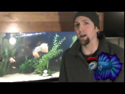 Ropefish Or Reedfish Care Guide Information