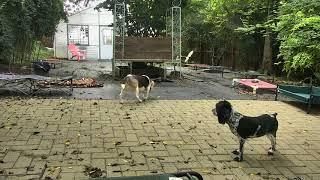Outside Dog Yard Cam 08-20-2018 12:56:36 - 13:56:37