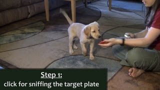 Puppy Target Training With The Clicker