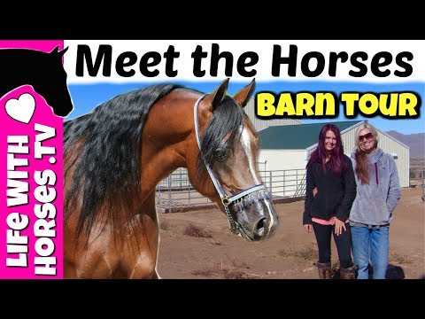 Lindsay's NEW BARN & INDOOR ARENA TOUR and Meet her HORSES | Arabian Horses