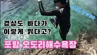 [경상도 바다 스노클링] 포항 오도리 해수욕장 스노클 …
