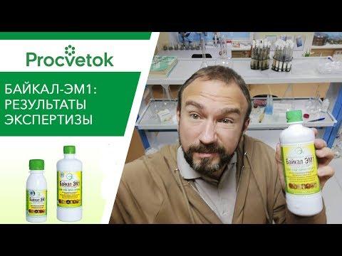 Байкал-ЭМ1: РАЗОБЛАЧЕНИЕ биопрепарата микробиологом