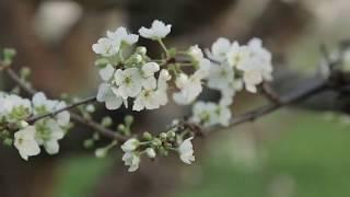 Природа Узбекистана весной