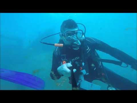 Danny's Dive on 1/4/16 in Grand Cayman Island (Ship Wreck Cali)