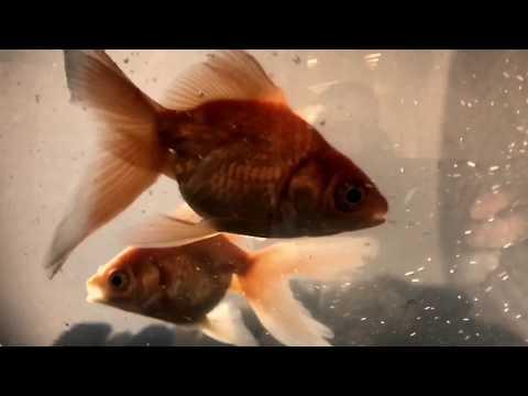 DEMO - ДЕМО – 2000 Лет Dj Karas (Raduga Remix 2009) ди джей Карась Ремикс