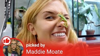 One of Maddie Moate's most viewed videos: Get Exploring! - Get Curious #TodayILearned