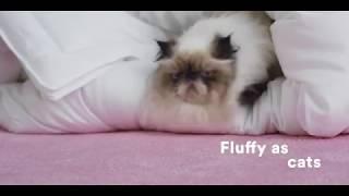Prime Day 2019 -Buffy Cloud Comforter - Queen Comforter - Eucalyptus Fabric - Hypoallergenic Bedding