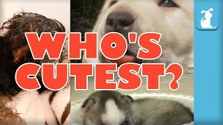 WHO'S CUTEST? YOU DECIDE! Which Puppy Is The Cutest? (Episode 5)