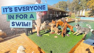 Cavoodle's, Wheaten Terriers, Airedale's, Border Collies, Beagles, Boxer, Vizslas all in for a swim!