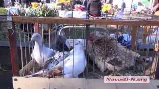 Видео Новости-N: Выставка голубей(С утра в воскресенье, 5 апреля, в парке им. Петровского открылась очередная выставка голубей. Такие мероприя..., 2015-04-05T09:50:41.000Z)