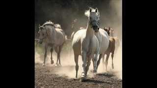 Konie-Piękne zwierzęta