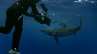 Surrounded by Oceanic White Tipped Sharks - Planet Earth - BBC wildlife