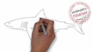 Как нарисовать карандашом белую акулу карандашом(Как нарисовать картинку поэтапно карандашом за короткий промежуток времени. Видео рассказывает о том,..., 2014-07-06T06:51:05.000Z)