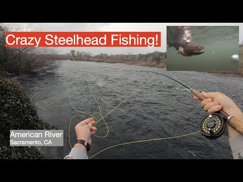 CRAZY Day Of STEELHEAD Trout Fishing On The American River, Sacramento California!
