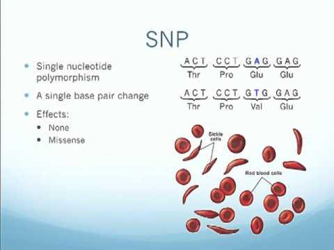 SNPs and Indels.m4v