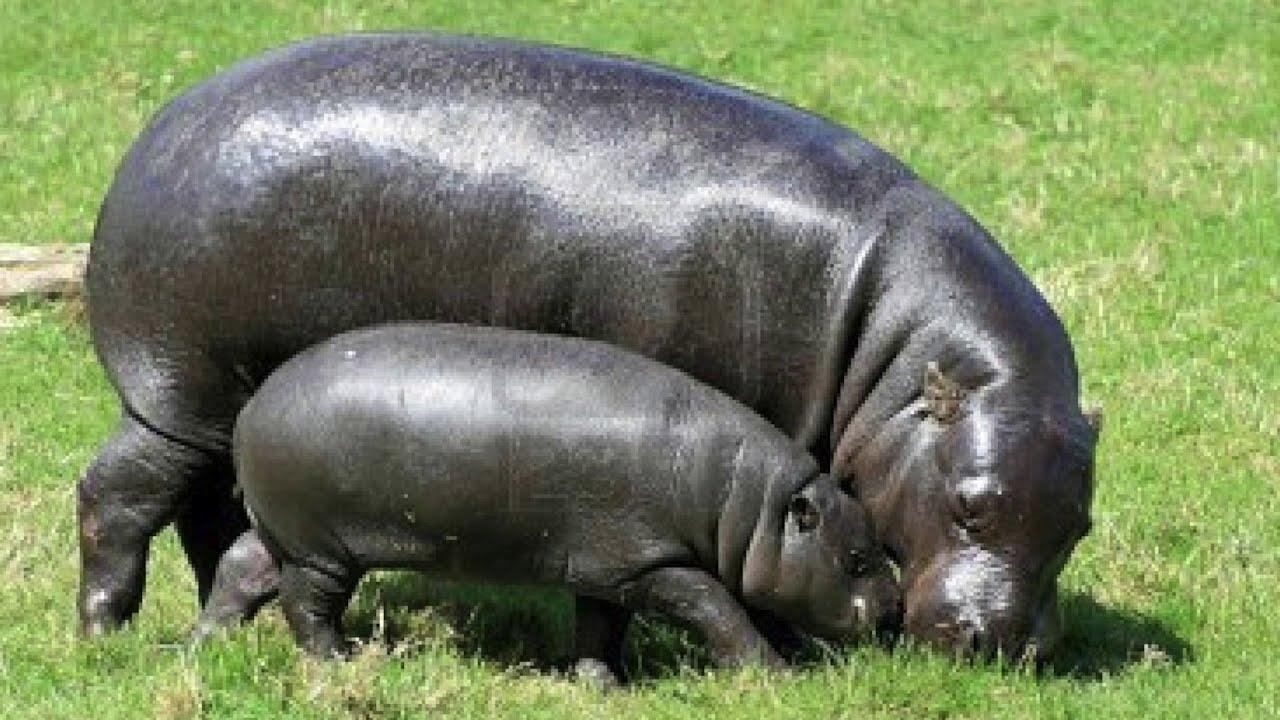 My Story (The Kru Tribe) - YouTube