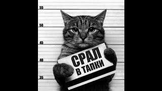 Смешные коты и котики, приколы про котов до слез - Смешные кошки #6
