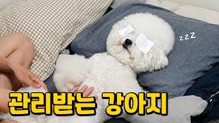 강아지 눈물자국 지우는 확실한 방법!