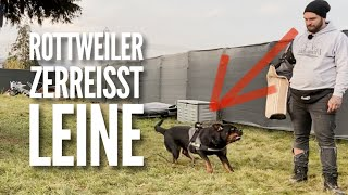 Aggressive Rottweiler breaks a leash - What to do? Problem Analysis Part 3 | Resocialization