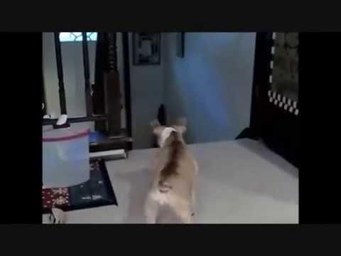 DOG vs SNEAKY CAT -- VERY FUNNY!