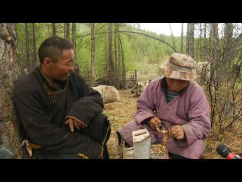 Eagle tv for endangered language project