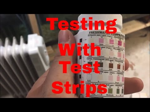 How To Use Test Strips To Check Your Water Quality Ammonia Test Nitrite Test Nitrate Test