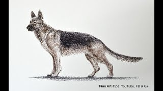 How to Draw a German Shepherd Dog With Pen & Ink - Narrated