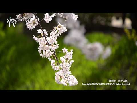 [KYOTO viewTV-33] 古都の春2(京都市) Spring ancient capital 2 (Kyoto) HD
