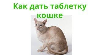 Как дать таблетку кошке. Ветеринарная клиника Био-Вет.