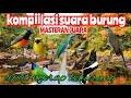 Kompilasi Suara Burung Masteran Suara Kasar Aneka Kicau  Mp3 - Mp4 Download