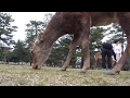 Nara Deer Park and an Adult Hotel in Japan