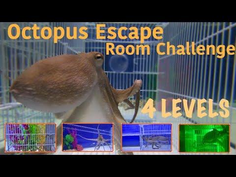 Octopus Escape Room Challenge