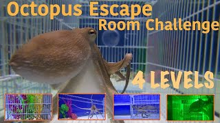 Octopus Escape Room Challenge