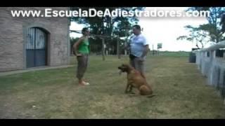 Adiestramiento Canino - Educar Y Liderar A Nuestros Perros