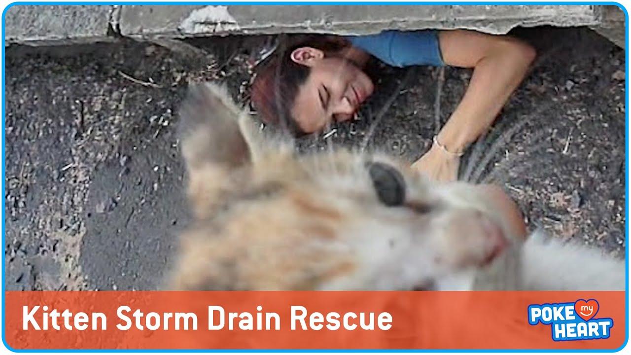 Storm Drain Kitten Rescue