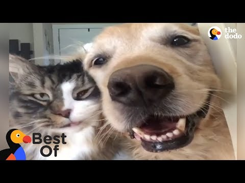 Animals Thankful For Being Rescued and Loved Compilation | The Dodo Best Of