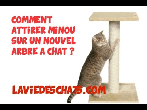 comment faire adopter un nouvel arbre chats pour faire ses griffes youtube. Black Bedroom Furniture Sets. Home Design Ideas
