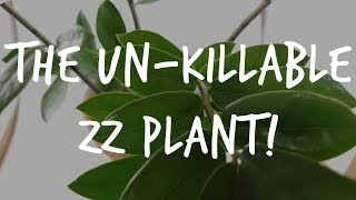 "The ""Unkillable"" ZZ Plant: Complete Zamioculcas Care Guide"