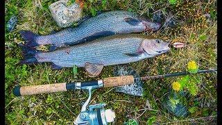 Ловля Хариуса спиннингом. Рыбалка на Крайнем Севере. Рыба тундровых рек.