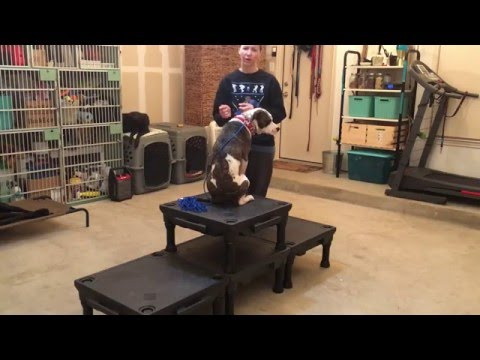 PK9 - Working With A Fearful Dog - Building Confidence and Trust (fourth session)