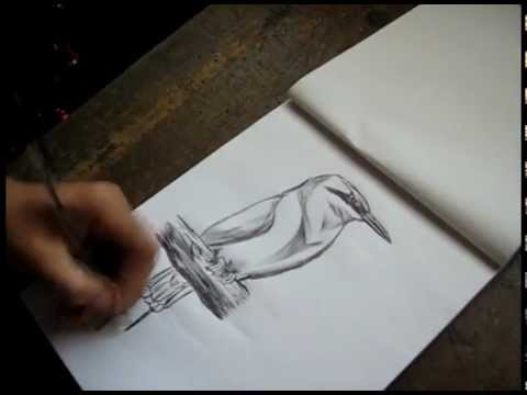 Worksheet. QuickSketch  Guardabarranco  YouTube