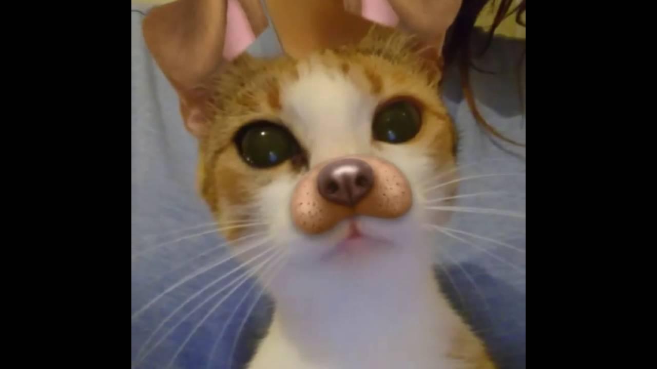 Funny Dog And Cats Snapchat