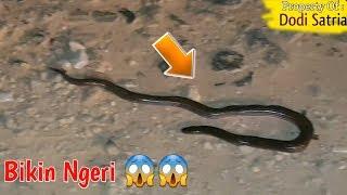 Astagfirullah !! Ngerinya,Hampir Terinjak Disangka Ular Cobra Mati,Ternyata...